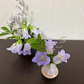 ほたるぶくろ/ホタルブクロ/花の写真/お花のある生活❁/お花のある暮らし...などのインテリア実例 - 2021-08-05 09:21:34