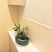 苔盆栽/バス/トイレのインテリア実例 - 2021-06-16 19:46:52