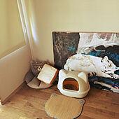 猫トイレ/サンルーム/猫好き/キジトラ/部屋全体のインテリア実例 - 2021-08-04 14:44:45