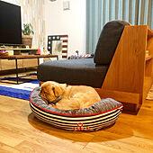すやすや寝顔に癒される♡ニトリのおすすめペットベッド