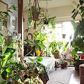 お花と植物で空間を飾る☆リラックスタイムをつくるボタニカルのインテリア