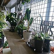 indoor greenのインテリア実例