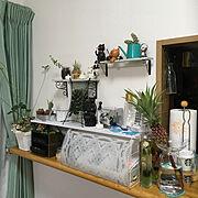 DIY棚のインテリア実例