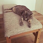 猫のインテリア実例