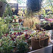庭のインテリア実例