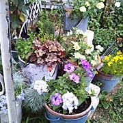 庭の花のインテリア実例