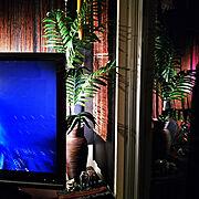 テレビ周りのインテリア実例