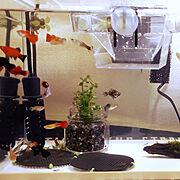 熱帯魚のインテリア実例