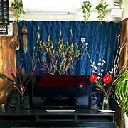 観葉植物のインテリア実例