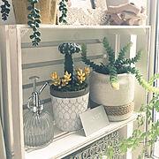 植木鉢のインテリア実例