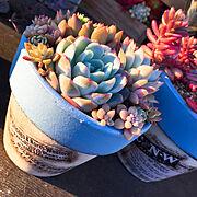 植物のインテリア実例