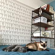 無印良品寝具のインテリア実例