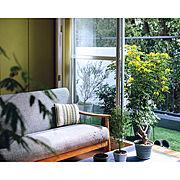 植物のある部屋のインテリア実例