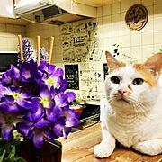 猫と暮らすのインテリア実例