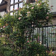 バラ好き/バラ♡/手作り庭/ローズガーデン/オベリスク/アーチ…などのインテリア実例