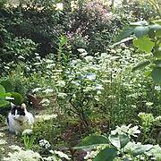 庭と猫/Overview/猫のいる日常/ゆき/猫/オルレア…などのインテリア実例