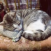 輸入壁紙/フランスアンティーク/座面リメイク/手編み/NO CAT,NO LIFE❤️/猫…などのインテリア実例