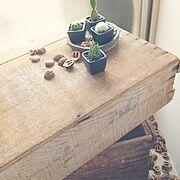 ハチグリーン/くるみ/サボテン/木箱/綯交…などのインテリア実例