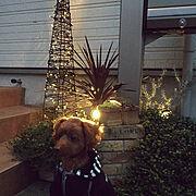 照明/ガーデニング/多肉植物/観葉植物/クリスマス/Entrance…などのインテリア実例