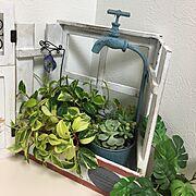 空き瓶/湿度計/スチール棚/コランダー/カゴ/水切りラック…などに関連する他の写真