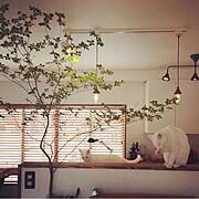 DIY/IKEA 照明/セルフリノベーション/雑貨/ハンドメイド/カフェ風…などのインテリア実例