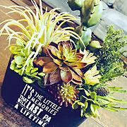 多肉植物/フォロワーの皆様に感謝!/多肉/preserved flower/いいね&フォローありがとうございます☆…などのインテリア実例