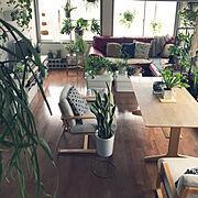 赤いソファー/赤いカウチソファー/ニトリ2018家具モニター/ソファ/ニトリ…などのインテリア実例