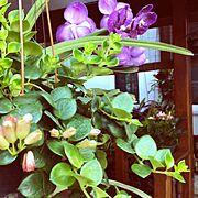 garden/tropical/On Walls…などのインテリア実例