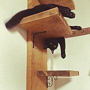 猫/ナチュラル/DIY/キャトタワー/部屋じゃなくてゴメンなさい/My Shelf…などのインテリア実例