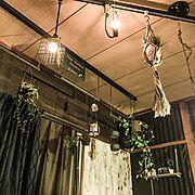 月兎印/観葉植物/フェイクグリーン/見せる収納に憧れる/動物フィギュア/IKEA…などに関連する他の写真
