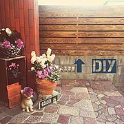 植物のある暮らし/DIY/coffee/DULTON/キャンドゥ/Can☆Do…などに関連する他の写真