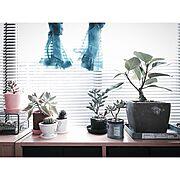 シースルーカーテン/My Shelf/NO GREEN NO LIFE/ブラインド…などのインテリア実例