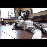 DIY/猫バカ部/ねこ部/…猫もだろうか/アポロゴムの木/Lounge…などのインテリア実例