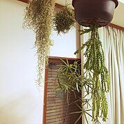 エアプランツ/観葉植物/古家/Lounge…などのインテリア実例