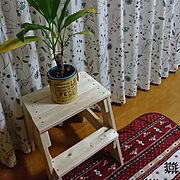 ドラセナ/しまむら♡/ニトリのカーテン/ものつくり体験教室/踏み台DIY/Lounge…などのインテリア実例