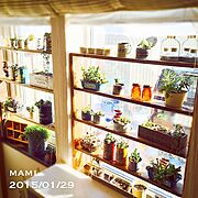 グリーンネックレス/ハンドメイド/セリア/リメ缶/窓辺/多肉植物…などのインテリア実例