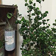エアプランツ/観葉植物/植物/JUNK GARDEN/NO GREEN NO LIFE/多肉植物…などのインテリア実例