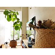 観葉植物/照明/男前/IKEA/犬/輸入住宅…などに関連する他の写真