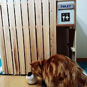 塗装はこれから/猫部屋にて/すのこDIY/猫トイレカバー/木工DIY/名前は「エル」です…などのインテリア実例