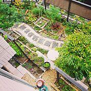NO GREEN NO LIFE/観葉植物/handmade/植物/実家…などのインテリア実例