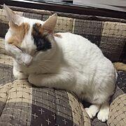 猫ばかのインテリア実例写真