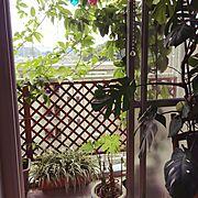 ベランダ/植物/Lounge…などのインテリア実例