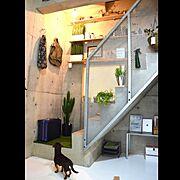 階段/賃貸/green/Dog/地下室/一人暮らし…などのインテリア実例