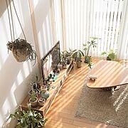 北欧/多肉植物/観葉植物/プランツ/無印良品の家/テクタ M21…などのインテリア実例