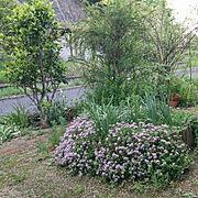 いいね!ありがとうございます◡̈♥︎/花のある暮らし/タイムの花が満開です❤︎/フォローすごく嬉しいです♡…などのインテリア実例
