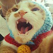 どらえもん/かぎ針編み/あみもの/インテリアじゃなくてごめんなさい/猫のいる生活…などのインテリア実例