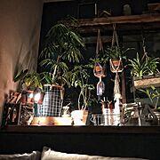 インテリアシート/ガラス目隠しシート/見直し/ダイソー/セリア/DIY…などに関連する他の写真
