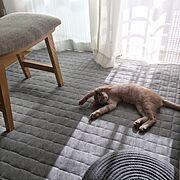 インスタ⇨aika_0130/猫のいる日常/暮らしを楽しむ/猫のいる生活/猫ばかりですみません…などのインテリア実例