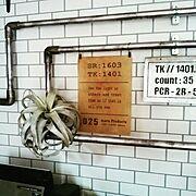 キッチン大改造計画中!/ダイソー/セリア/ゴミ袋収納/キッチンツール掛け/キッチン雑貨…などに関連する他の写真