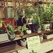 ダイソーのプレート♡/棚板リメイク/空き箱リメイク/多肉植物/観葉植物/白いカボチャ♡…などのインテリア実例